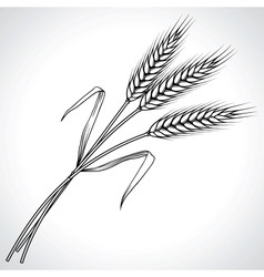 Ripe black wheat ears isolated vector