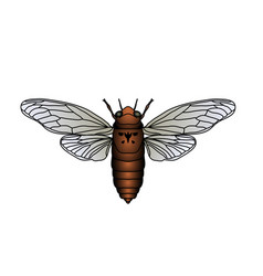 Cicada cicadidae sketch of cicada cicada vector