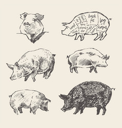 Drawn pigs scheme pork cuts restaurant menu vector