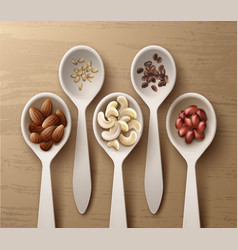 Different nuts in spoons vector
