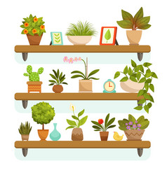 home plants and decorative flowers in pots vector image
