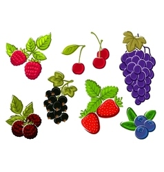 Isolated garden and wild berries fruits vector