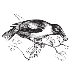 Hawfinch vintage engraving vector