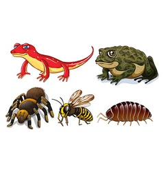 Small animals vector image