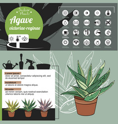 Template for indoor plant agave tipical flowers vector
