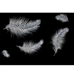 Flying feathers on black background vector