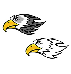 cartoon falcon or hawk head vector image vector image