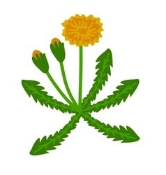 Dandelion plant vector
