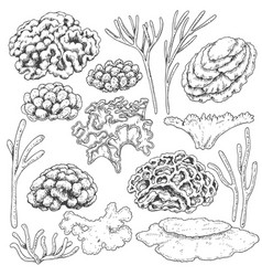 sketch of corals set vector image vector image