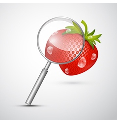 Magnifying glass and strawberry isolated on grey vector