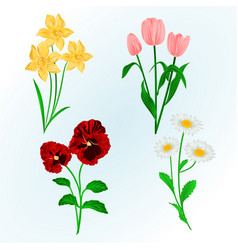 Spring flowers daffodils pansies tulips vector