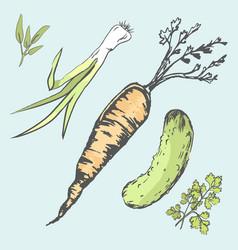 Crispy carrot green cucumber and fresh greens vector