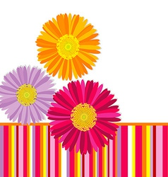 Daisy flowers greeting card vector