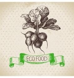 Hand drawn sketch radish vegetable eco food vector