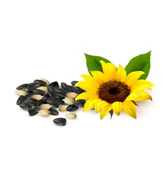 Background with yellow sunflowers and sunflower vector