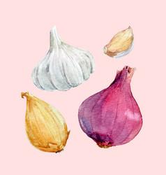 watercolor onion set vector image