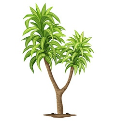 The queen of dracaenas plant vector