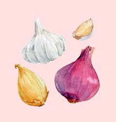 Watercolor onion set vector