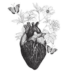 Human anatomical heart whith flowers vector