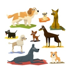 Different dog breeds collection vector