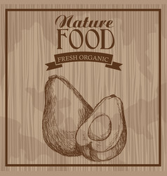 avocado nature food fresh food hand drawn vector image