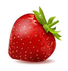 Ripe strawberry isolated vector