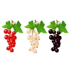 currant red black and white on bench vector image vector image