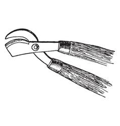Pruning shears vintage vector