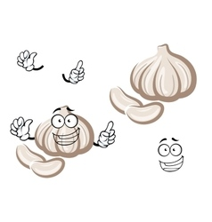 Cartoon fresh garlic bulb vegetable vector