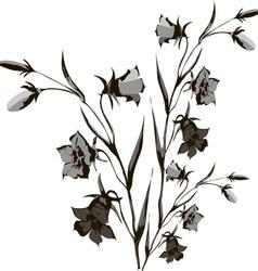flower of campanula vector image