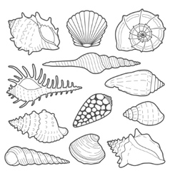 Sea shells icon set vector