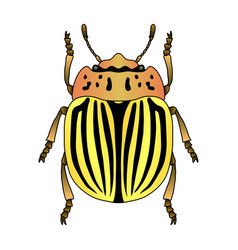 colorado potato beetle leptinotarsa decemlineata vector image