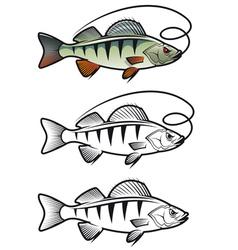 Perch fish vector