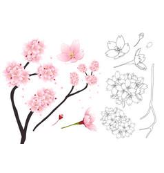 sakura cherry blossom flower outline vector image vector image