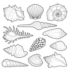 Sea shells icon set vector image vector image