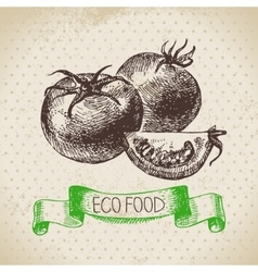 Hand drawn sketch tomato vegetable eco food vector