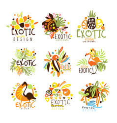 exotic summer vacation colorful graphic design vector image