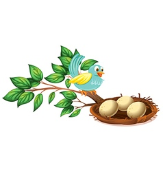 A blue bird watching the eggs in the nest vector image