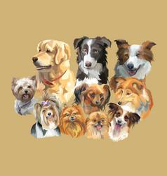 Fluffy dog breeds vector