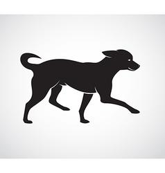Image of an dog chihuahua puppies vector