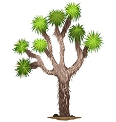 The yucca brevifolia tree vector