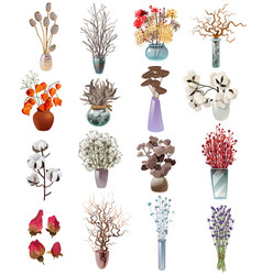 collection of dry flowers bouquets in vases vector image