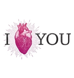 I love you with human anatomical heart vector
