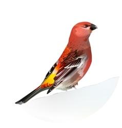 Red bird pine grosbeak vector