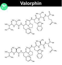 Valorphin biochemical compound opioid peptide vector
