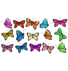 Colourful butterflies vector image