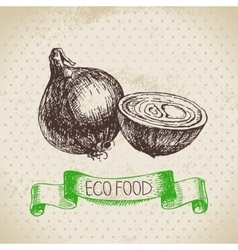 Hand drawn sketch onion vegetable eco food vector