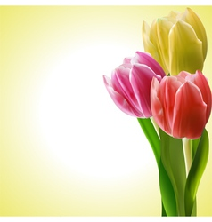 Tulips background vector image