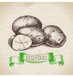 Hand drawn sketch potato vegetable eco food vector