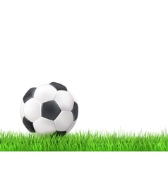 Soccer ball grass background vector